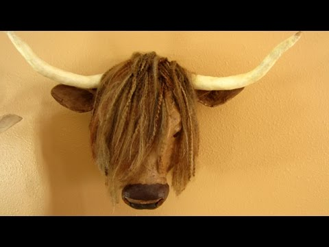 Highland Cow Faux Taxidermy Mount Youtube
