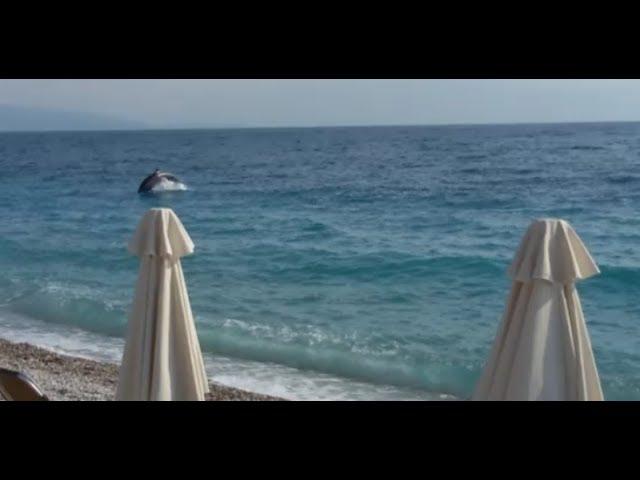 Δελφίνια στην παραλία της Ακράτας - Dolphins play near the beach