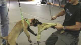 Protection Dogs Plus: Protection Puppy Training