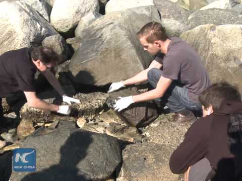 RAW: Vancouver residents scramble to clean downtown beach after offshore fuel spill
