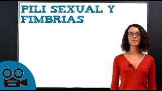 Pili sexual y fimbrias