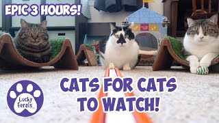 Cats Videos For Cats To Watch With Sound ➙ EPIC 3 HOURS! * Cats Playing * Entertainment For Cats
