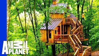 Building a Treehouse Inspired By a Bird House