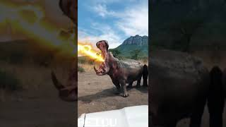 Angry Angry Hippos