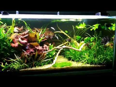 Питательная подложка в аквариум, своими руками. Просто и эффективно.