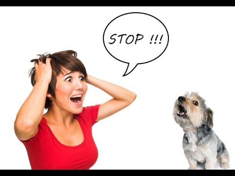how-to-stop-shih-tzu-from-barking-excessively-|-shih-tzu-housebreaking