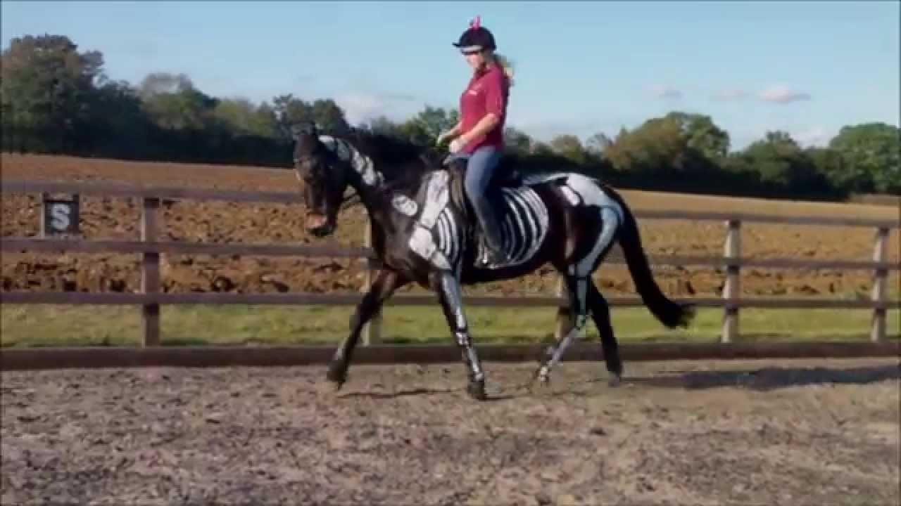 halloween skeleton horse painting - walk and trot ridden - youtube