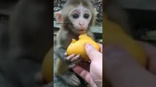 Very cute and funny animals