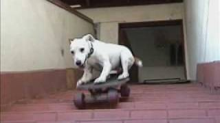 Dog Extreme Pete..learn To Train Like This
