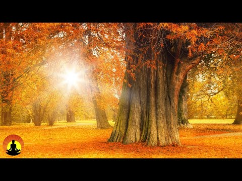 🔴 Relaxing Music 24/7, Sleep Music, Meditation, Healing, Yoga, Spa, Calming Music, Relax, Study