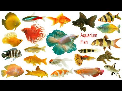 Aquarium Fishes Names, Meaning & Images | Necessary Vocabulary Tutorial