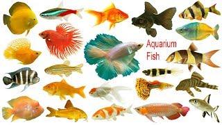 Aquarium Fishes Names, Meaning & Images   Necessary Vocabulary Tutorial