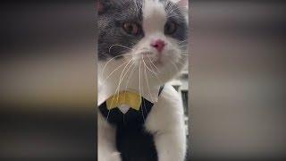 Приколы с животными коты и собаки за Январь 2019 #5 Смотреть до слез приколы с животными