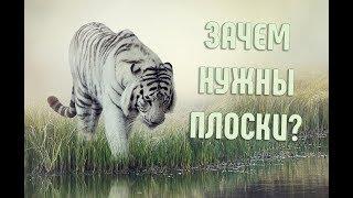 А вы задумывались, почему тигр полосатый?   Интересное о животных