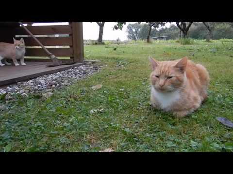 cats kingdom - part 1