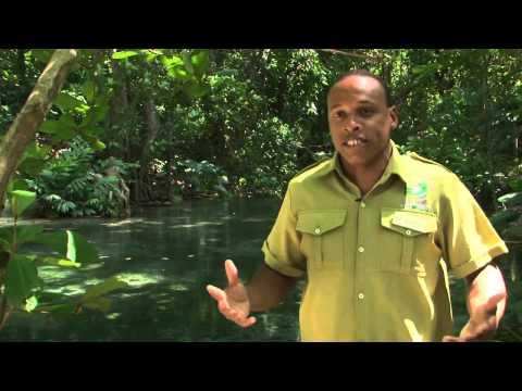 Rainforest Bobsled Jamaica