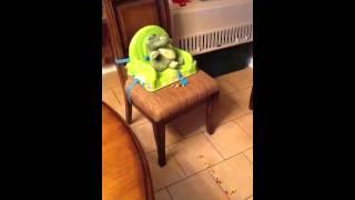 Elf On The Shelf Visits Nashville Dog Training(pak Masters)