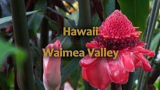 Waimea Valley, Oahu Hawaii thumbnail