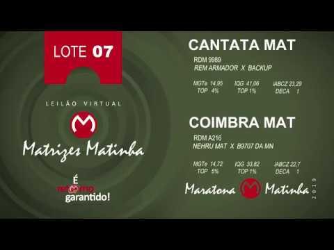 LOTE 07 Matrizes Matinha 2019
