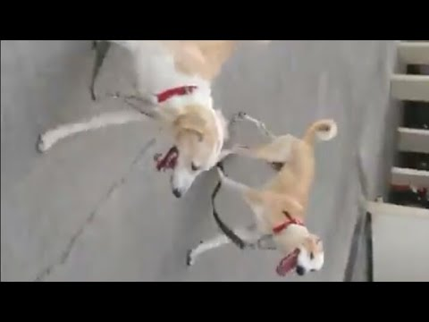CUTE PUPPIES || DOG TRAINING || DOG GAMES || DOG PARK || RESCUE DOG || DOG TV || TUFFY AND LILY- DOG