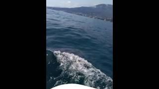 Гурзуф. Возвращение с рыбалки. Дельфины.