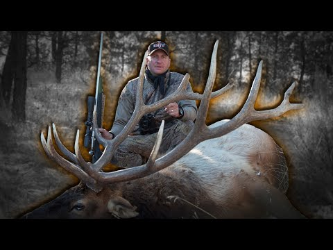 Hunting Montana Bulls After The Elk Rut With Guy Eastman