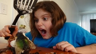Giant Flies Invade House Spatula Girl Attacks