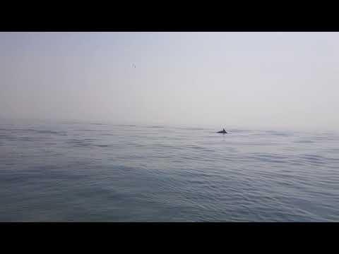 Крым Евпатория 2018 экскурсия на дельфинов #Крым #Евпатория