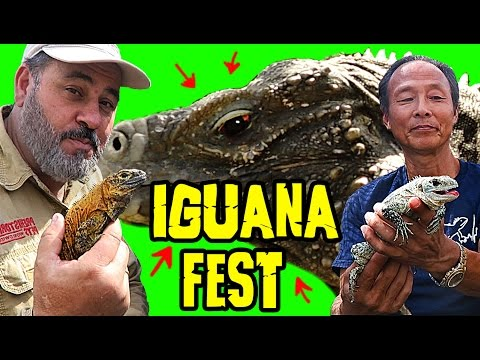 reptile-room-tour-of-rarest-iguanas-on-earth