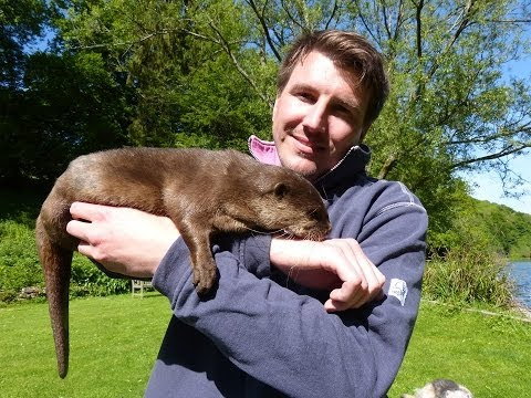 Dr Daniel Allen's PET NATION: Otters