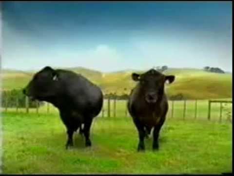 Phim hài về 2 con bò playboy