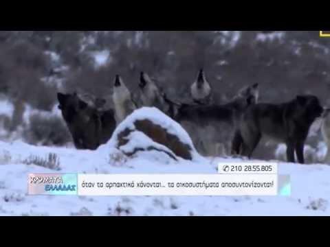 Χρώματα Ελλάδας - Τα αρπακτικά χάνονται και τα οικοσυστήματα αποσυντονίζονται...
