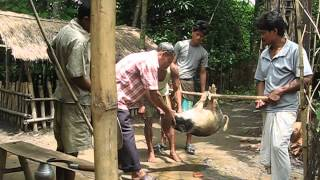 Bangladesh 2011 - Pig Slaughter.AVI