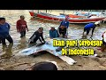 - Perahu Nelayan dapat ikan pari Raksasa