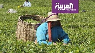 السياحة عبر العربية | متحف الشاي في جزيرة موريشيوس يروي كيفية قطفه وتصنيعه