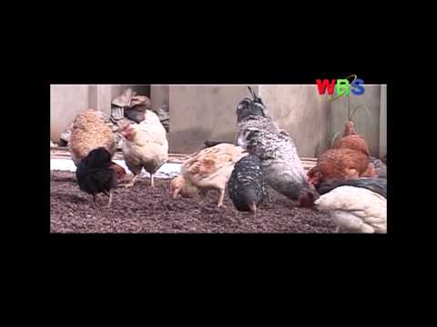 Business Feature: POULTRY FARMING