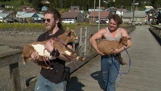Hauling Goats in the Bush | Alaskan Bush People