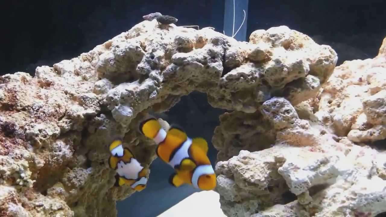 Nano Reef Led Lighting