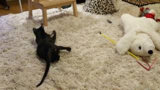ориентальный кот играет с игрушечной мышкой которая пищит