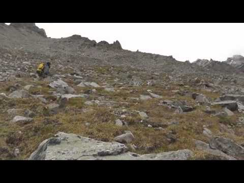 Chasing Dall Sheep in the Alaska Range