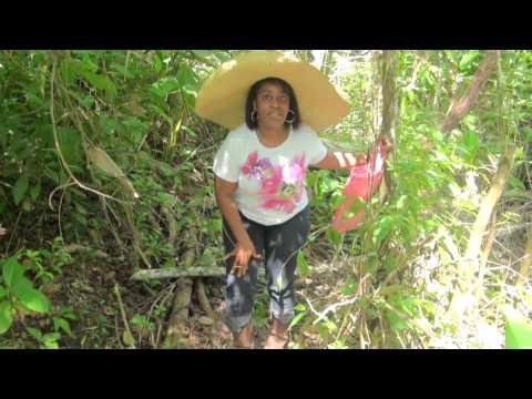 Exploring Trinidad Country Life