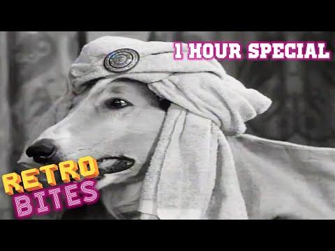 Lassie   1 Hour Compilation   Lassie English Full Episodes  🐕
