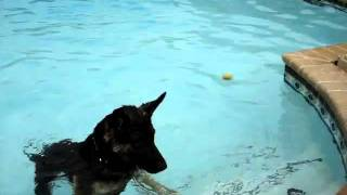 Rowdy in the pool at Action Pack Dog Center