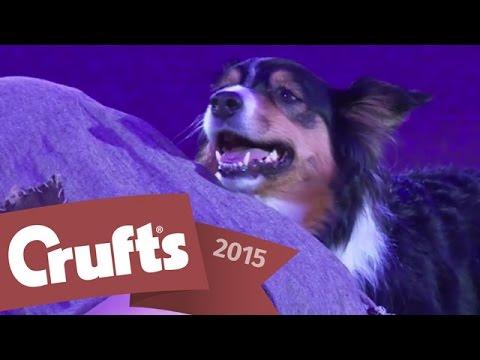 Heelwork to Music - Freestyle International Winner | Crufts 2015