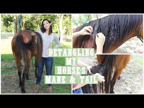 How To Detangle A Horse's Mane and Tail + GIVEAWAY?!?!