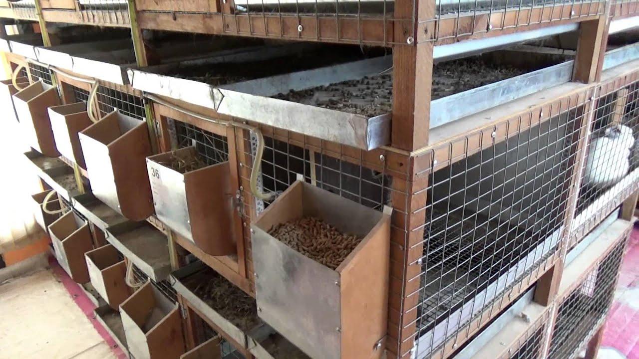 промышленные клетки для кроликов от Марата - YouTube