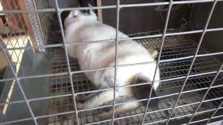 Обзор клетки для кроликов. Евроферма