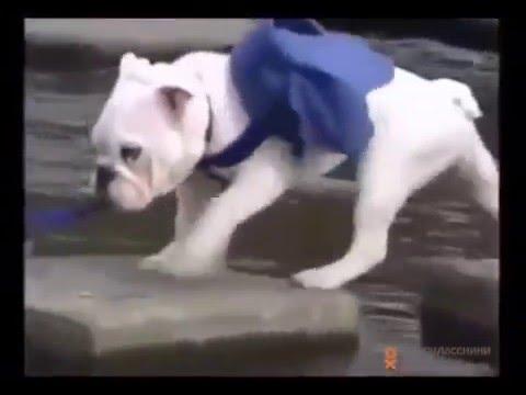 Смотреть ролик Порно собаки с человеком юные целки на