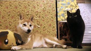 【もも天劇場】場末のスナック Dog and Cat play pub