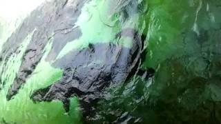 aquarium shah alam arapaima gigas